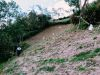 Quinoa-Anbau